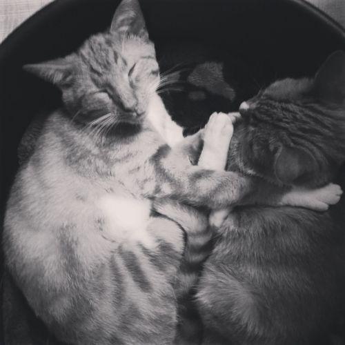 #hugging #cats