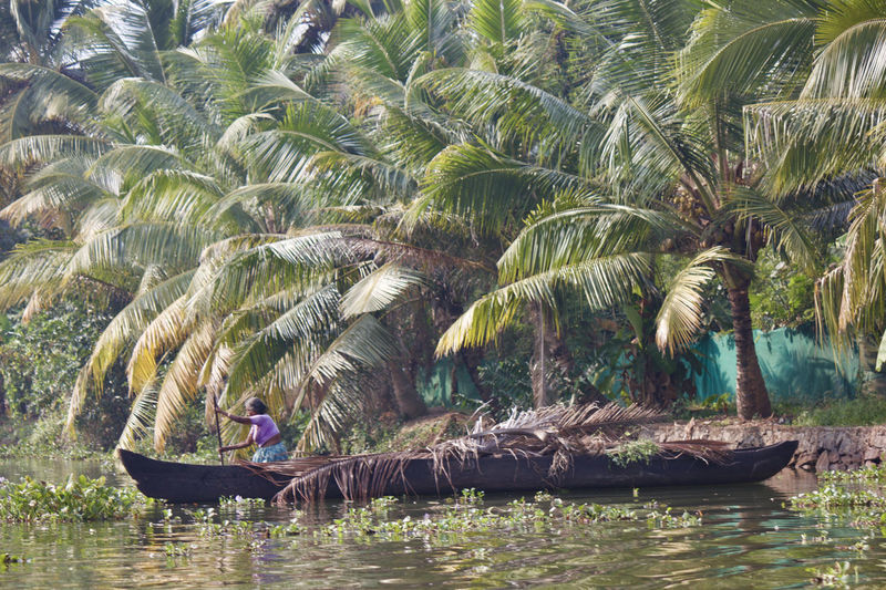 Captured @ Kumarakom: a village on Vembanad Lake in the backwaters of Kerala, southern India. It's laced with canals Beauty In Nature Boat Boating Coconut Trees Daily Life Green Color Grenery Lake Life Life In Motion Lifestyles Nature Outdoors Palm Tree Plant Scenics Tranquility Tree Uniqueness Villege Water Water Plants Water Reflection Water Reflections Woman Women Around The World
