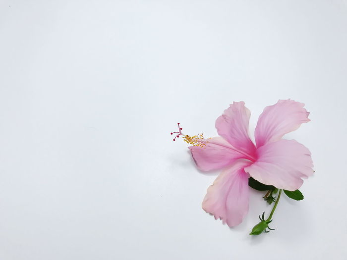 Pink flowers on