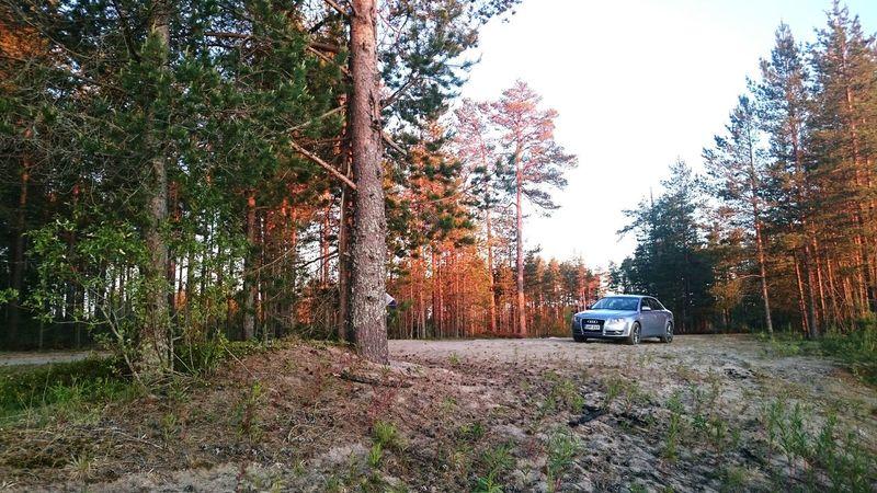 Finland Sony Xperia Z3 Summer Nature Scandinavia Sun Woods Audi