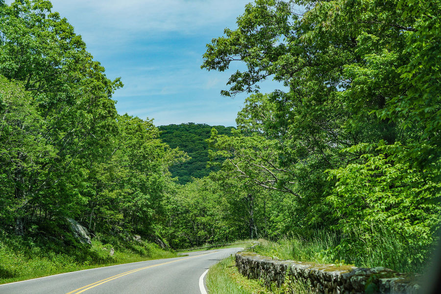 Beauty In Nature Curve Day Green Color Growth Landscape National Park Nature No People Outdoors Road Scenics Shenandoah Sky The Way Forward Tranquility Transportation Tree
