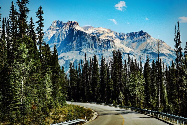 Canada Mountain Range Roadtrip Nature_collection WoodLand Tranquility Tranquil Scene Vacation Time Traveling