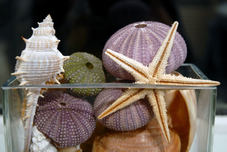 Close-up of animal shells in container