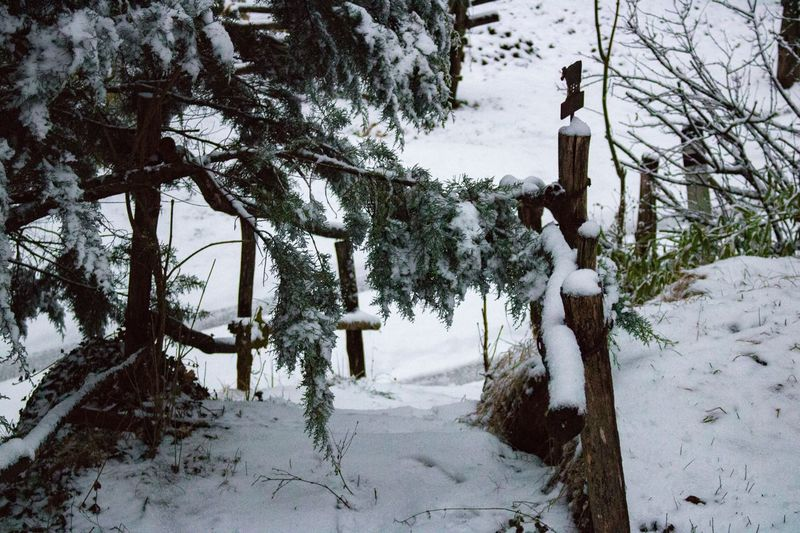 Mountain Snow Cold Temperature Winter Weather Tree Nature Outdoors Day Frozen Branch Beauty In Nature No People Birdhouse Tree Trunk Tranquil Scene Scenics Tree The Way Forward Forest