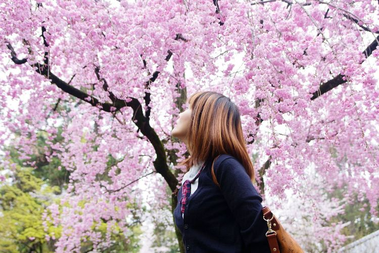 Low angle view of woman looking at pink flowering tree at park