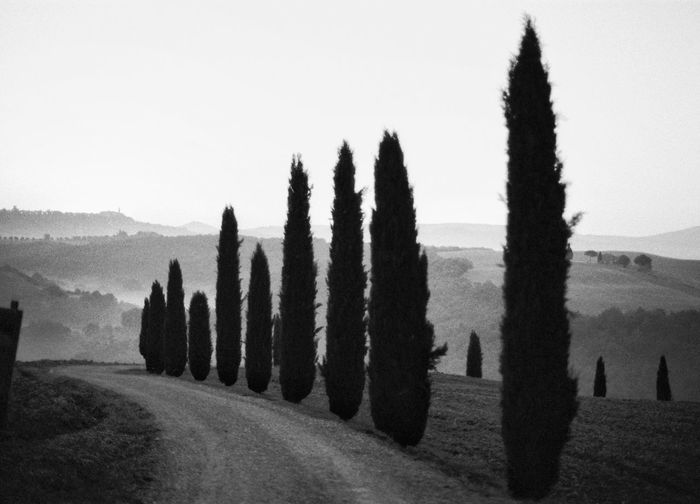 Val d'Orcia Filmphotography Italy EyeEm Tuscany Travel Destinations Sky Plant Tree Nature Clear Sky Tranquility Tranquil Scene Land Field Scenics - Nature No People Beauty In Nature Outdoors Landscape Silhouette Day