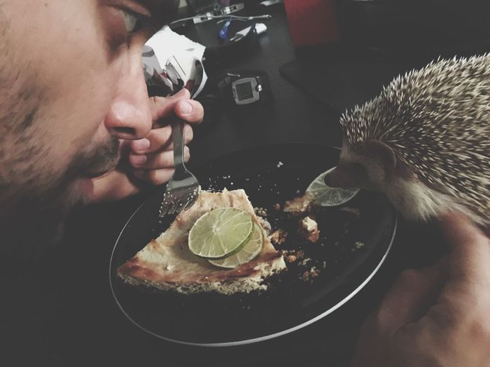 Close-Up Of Man Eating Food While Looking At Hedgehog