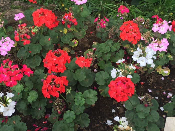 Flowers Blooms