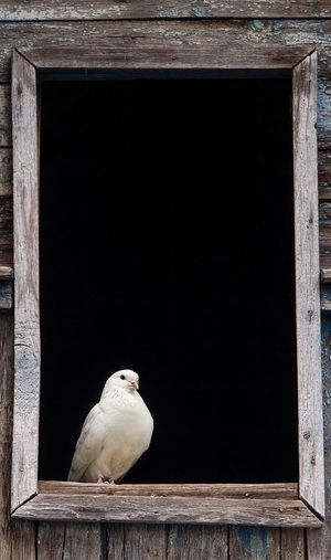 Close-up of bird perching on window sill