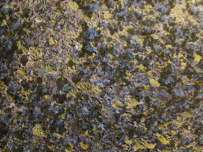 Abstract Backgrounds Close-up Day Full Frame Lichen Moos Nature No People Outdoors Pattern Rock - Object Rough Textured  Yellow
