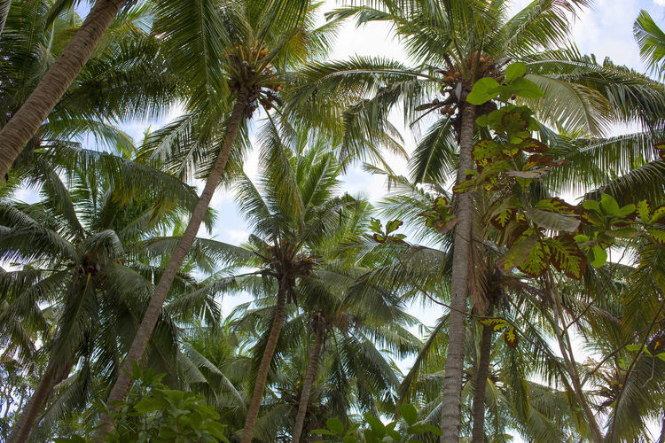 Bali Beauty In Nature Green Color Holidays Low Angle View Nature Palm Tree Tranquility Tree