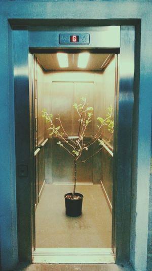 Tree Lift