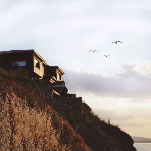 Birds flying over houses against sky during sunset
