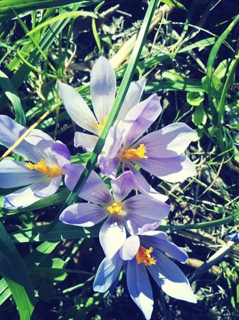 Flowers Nature Flores Galicia