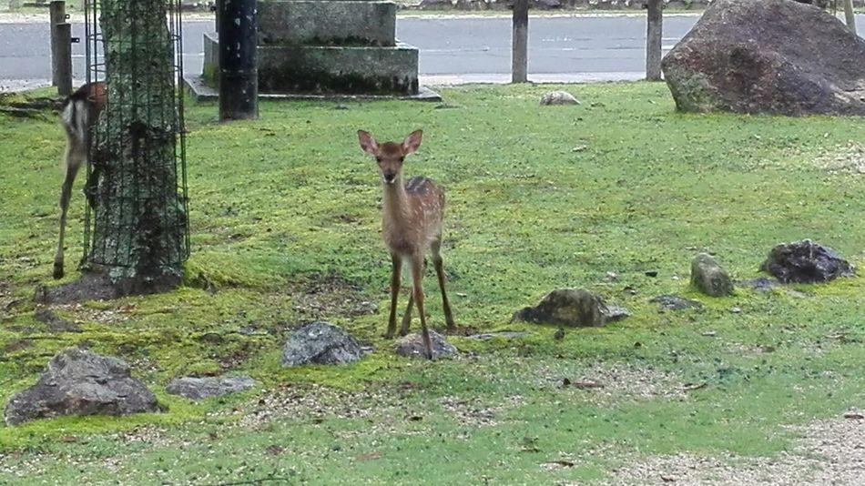 Bambi UltimateJapan