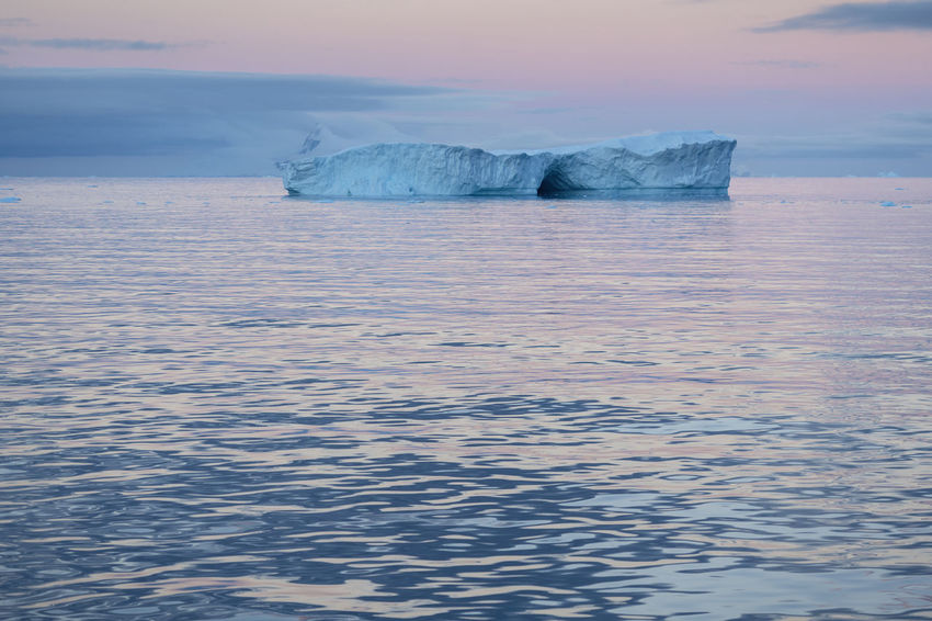 Iceberg off the coast at Brabant Island, Palmer Archipelago, Antarctic. Global Warming Ice Pink Beauty In Nature Blue Ice Climate Change Cold Temperature Environment Floating On Water Frozen Glacier Horizon Over Water Ice Iceberg Iceberg - Ice Formation Nature No People Outdoors Scenics - Nature Sea Sunset Tranquil Scene Tranquility Water