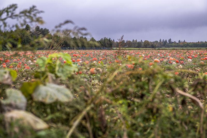 View of flowering plants on field against sky