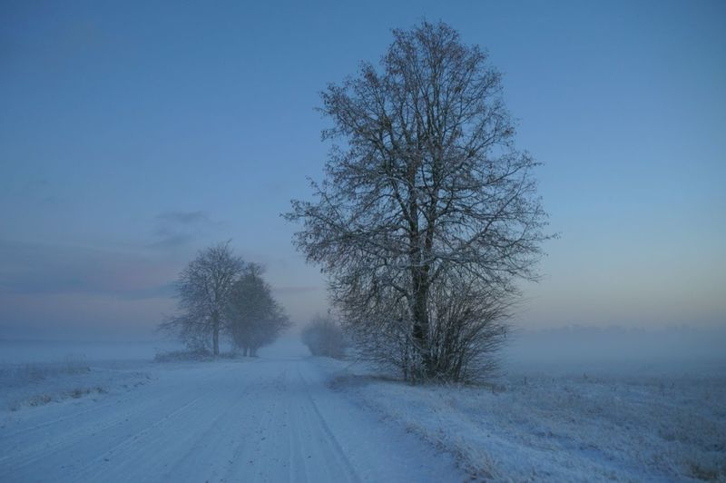 Outdoor Photography Outdoors Nature_collection Nature Naturelovers Winter Wonderland Wintertime Tree Snow Cold Temperature Winter Bare Tree Branch Road Blue Silence Fog Treelined Diminishing Perspective Frozen Lake Frost Weather Condition Country Road White Line Ice Crystal The Way Forward