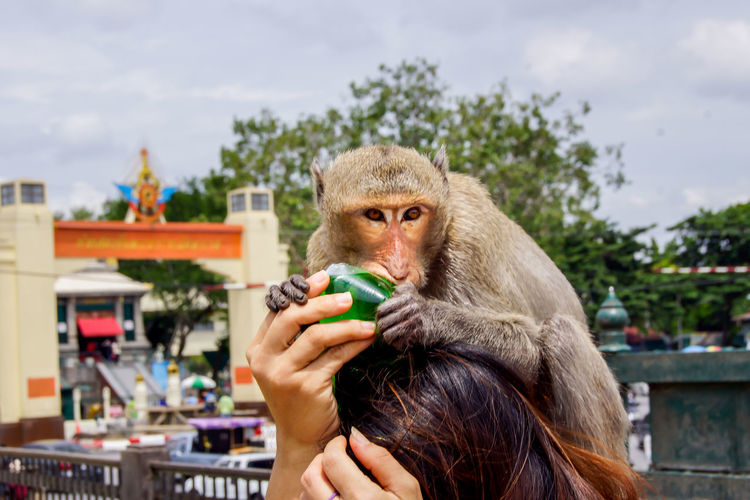 Close-Up Of Monkey On Young Woman's Head