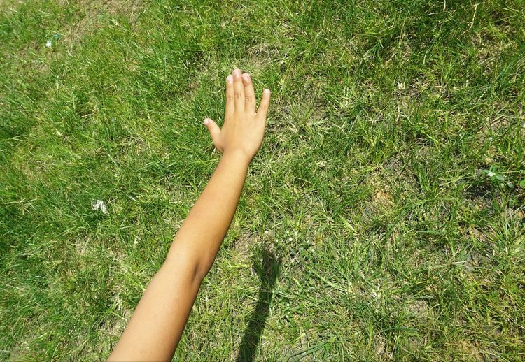 High angle view of person hand on grass