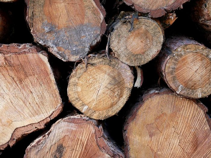 Baumstämme Abundance Backgrounds Close-up Deforestation Environmental Issues Firewood Forestry Industry Fossil Fuel Fuel And Power Generation Full Frame Heap Large Group Of Objects Log Lumber Industry No People Pile Repetition Shape Stack Textured  Timber Tree Ring Wood Wood - Material Woodpile EyeEmNewHere Press For Progress Colour Your Horizn