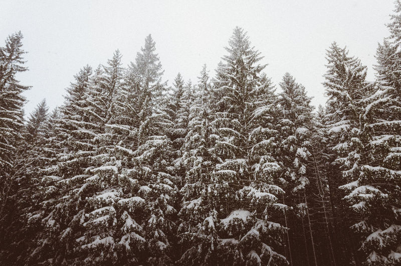 Beauty In Nature Cold Temperature Day Forest Freshness Growth Landscape Nature No People Outdoors Pine Tree Scenics Sky Snow Snow ❄ Spruce Tree Tranquility Tree Winter Winter Wonderland Wintertime
