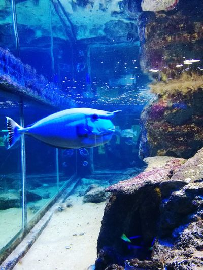 Unicorn fish Fish Water Aquarium No People Underwater Nature Ocean