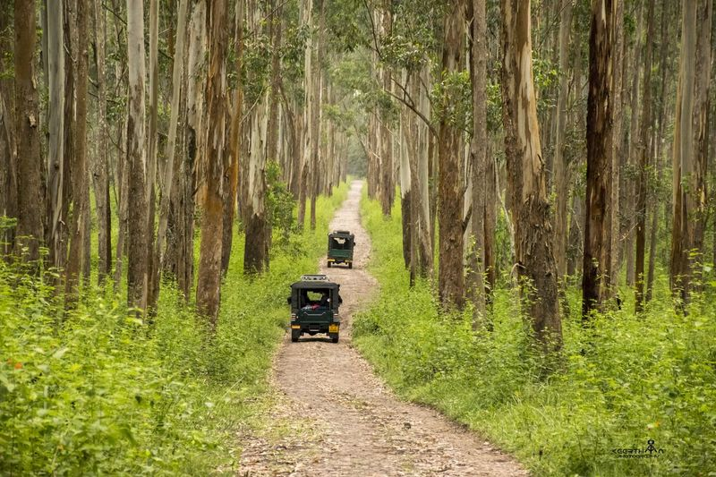 wanderer Wanderer Wanderlust Traveldiaries Travel Memories Nikon Wildlife Jeep Offroading Morning Bliss Sunshine Nature Therapy Happy Driving Animal Wildlife Open Tree Rural Scene Forest Agriculture Field Off-road Vehicle 4x4 Dirt Road Empty Road Treelined Pathway The Way Forward