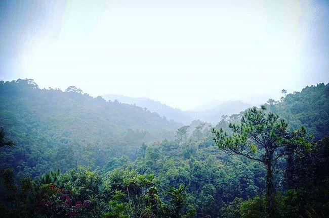 The mist masked it more beautiful.. Travel HongKong Instapic Instatravel Mountains Greenary Plants Nist Sunday Morning Instatraveling Instagood Theworldguru Imaginelandscape Travelingourplanet Hike Trail Mornings Amazing Amazingview