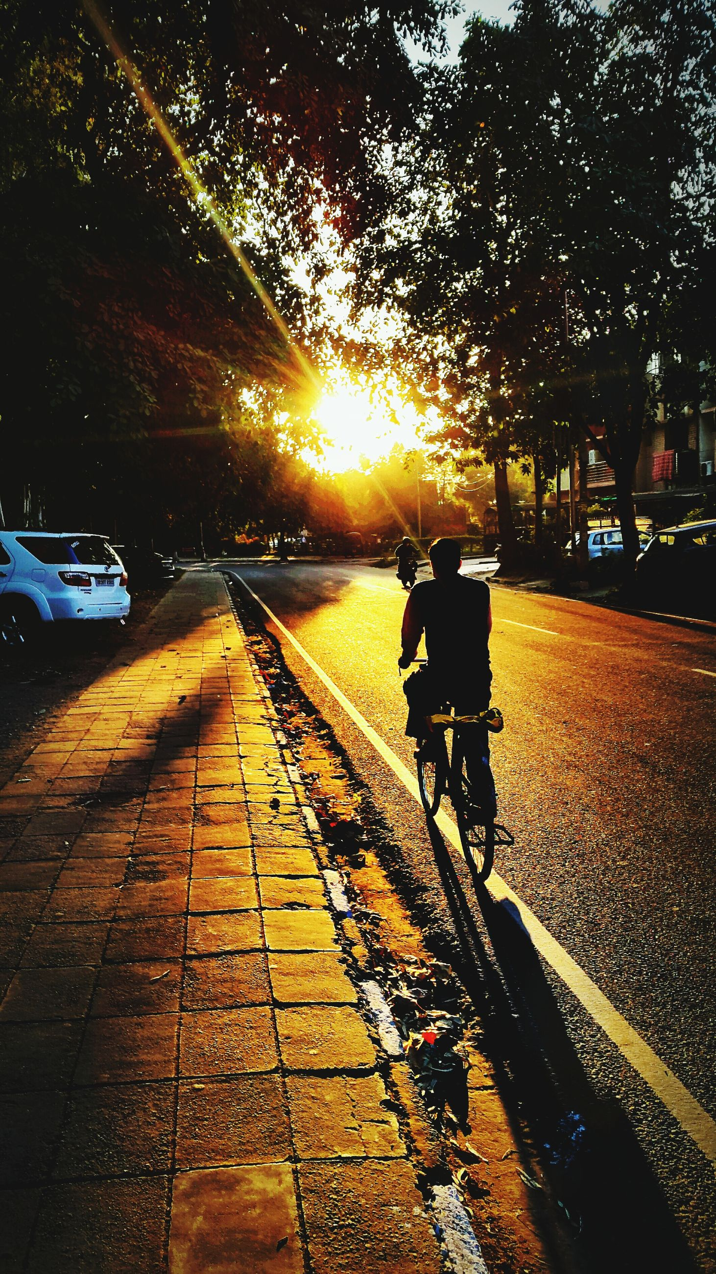 transportation, land vehicle, mode of transport, car, sunset, street, road, the way forward, sunlight, sun, tree, silhouette, sidewalk, outdoors, on the move, travel, lens flare, street light, city, bicycle