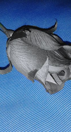 Blu.🌹 Rosé Flower Blue Colour