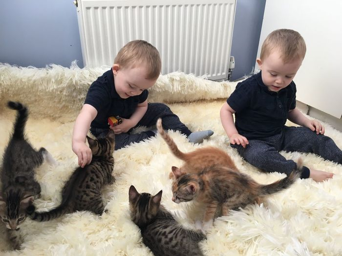 Brothers playing with cats on rug at home