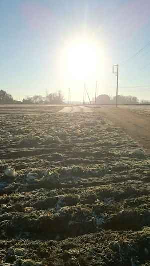 Its Cold Outside Cold Morning Moning Ride Chinese Cabbage Soil And Sun Utility Pole White Air Streetphotography Field After Harvesting Mobile Photography