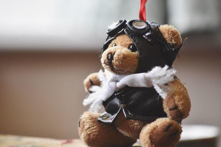 A Child's Dream Flight Teddy Aviation Plane Aviator Leather Focus Depth Of Field EyeEm Best Shots