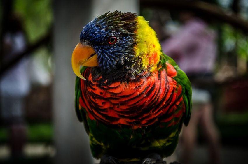 Bird Birds Zoo Colorful