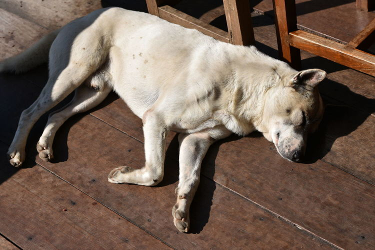 Dog sleep on