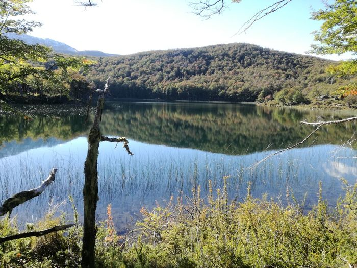 Water Tree Flower Lake Reflection Pinaceae Sky Mountain Range Mountain EyeEmNewHere
