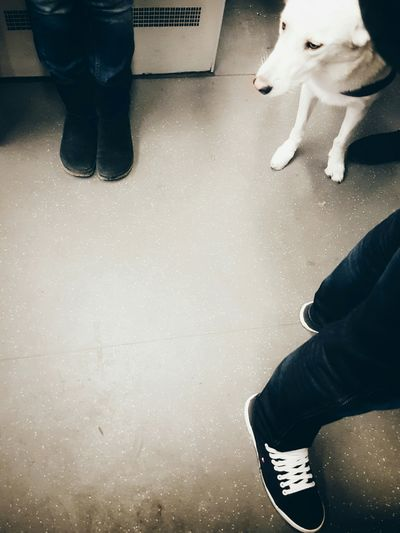 Feet Notes From The Underground White White Dog Streetphotography Public Transportation Pet Dog Subway Commuting My Fuckin Berlin On The Way To Work Colors Of Berlin  White Fur Standing Urban Lifestyle Capture The Moment Waiting Showcase March Close Up Street Photography Showing Imperfection