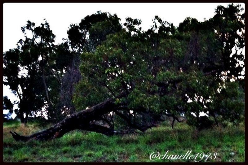 Fallen tree TreePorn Trees EyeEm Nature Lover Semi-rural