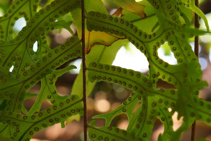 Tree Fern Microbiology Microscope Science Biology Healthcare And Medicine Full Frame Complexity Bacterium Research Living Organism Cell Microscope Slide Photosynthesis Biotechnology Medical Sample Petri Dish Leaf Vein Biochemistry Plant Life Magnification Anatomy High Wycombe Delicate Relaxed Moments Fungus Blood Test