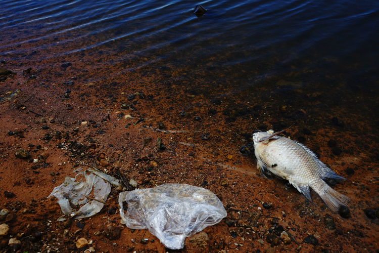 Plastic waste with dead fish at the riverbank