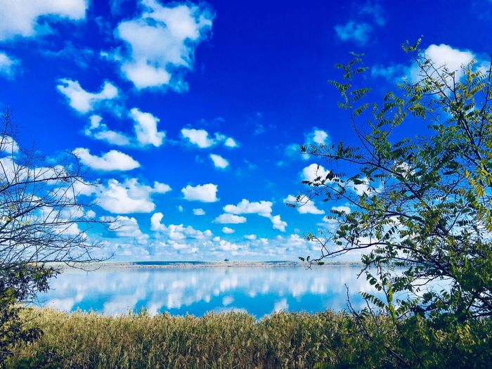 Sky Beauty In Nature Plant Cloud - Sky Water Tranquility Scenics - Nature Tranquil Scene Reflection No People Tree Growth Outdoors Blue Nature Day Sunlight Lake Idyllic