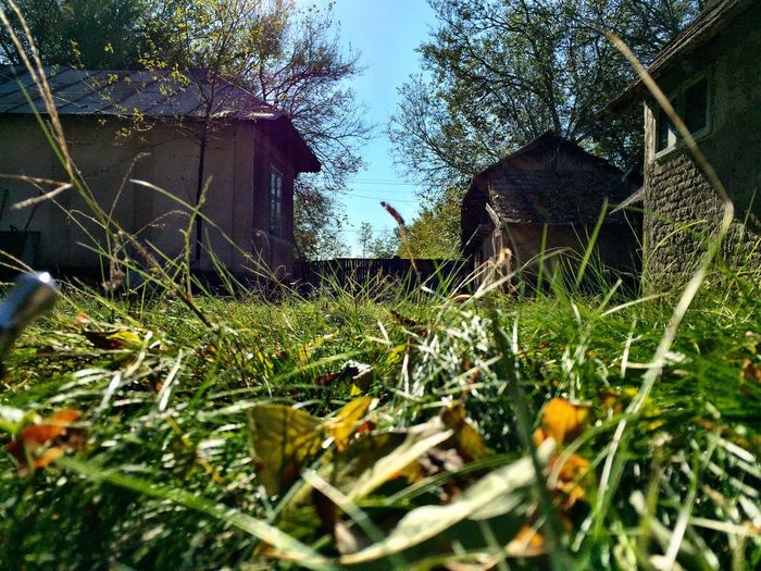 Yard Grandparentshouse IPhoneography Grass Sky Autumn Colors Autumn🍁🍁🍁 Autumnal Colours Soaking Up The Sun Iphonography Relaxing House