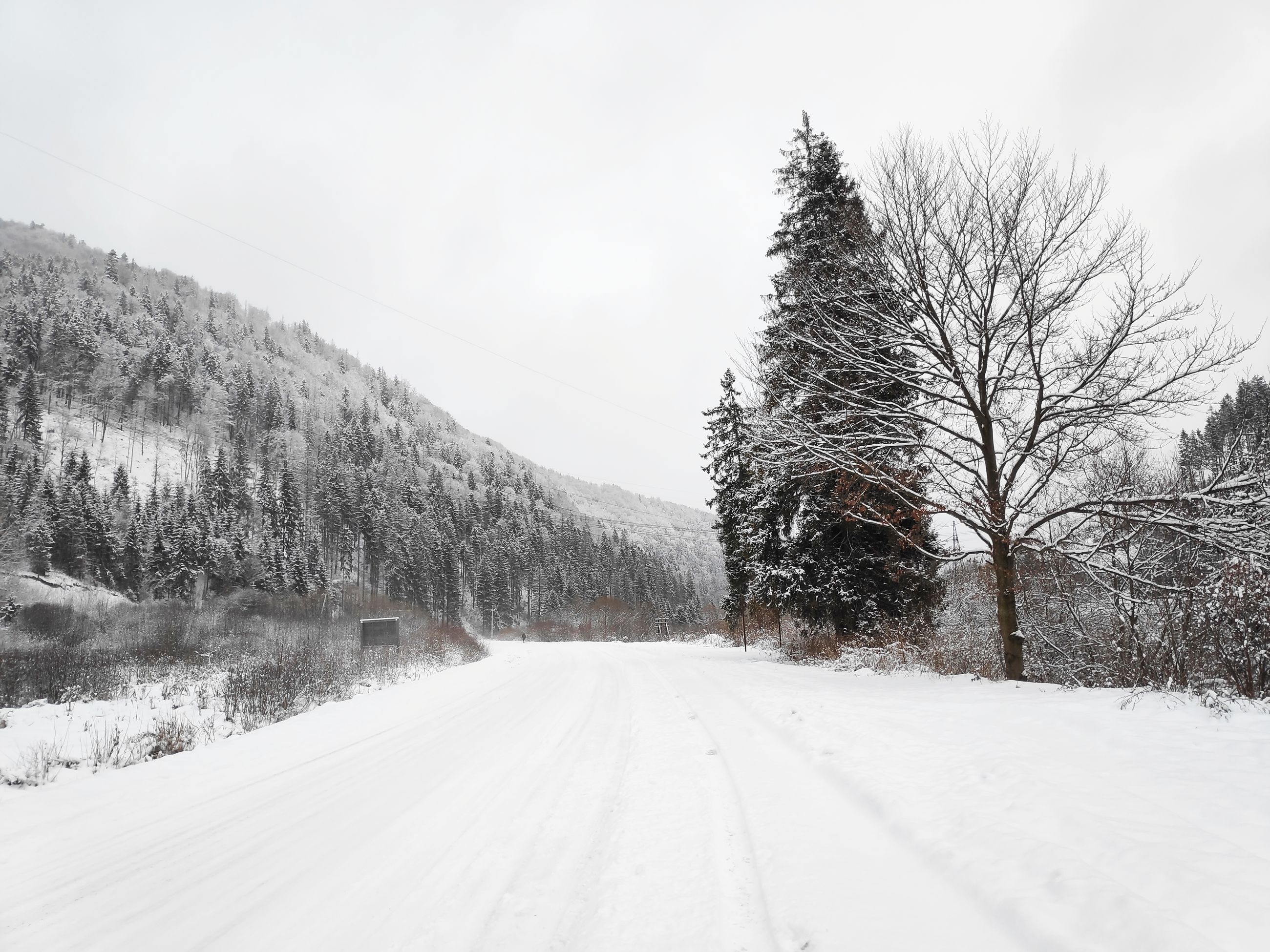cold temperature, snow, winter, tree, transportation, the way forward, road, sky, direction, plant, no people, bare tree, beauty in nature, nature, covering, scenics - nature, white color, tranquil scene, day, diminishing perspective, outdoors, snowing, long