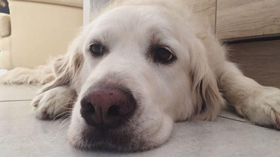 Flo 💗 Dog Pets One Animal Domestic Animals Animal Themes Animal Head  Animal Nose Portrait Day Taking Photos Friends Indoors