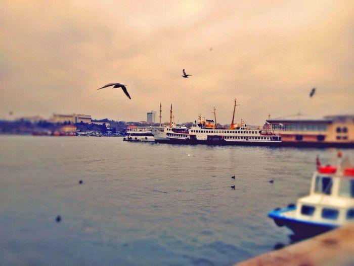 Rıhtım Sahil Martılar Vapur Istanbul Instagram