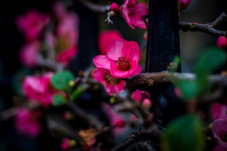 Floral Winter Beauty Plant Flowering Plant Freshness Flower Pink Color Beauty In Nature Growth Fragility Close-up Vulnerability  No People Petal Nature Focus On Foreground Selective Focus Outdoors Day Magenta Inflorescence Flower Head