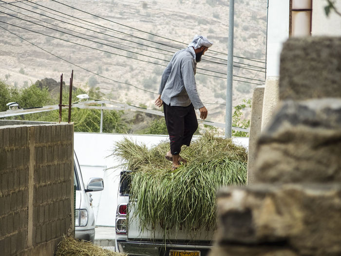 barefoot muslim man with turban loading grass on a truck Farm Life Oman barefoot Barefoot Farmer Barefoot Muslim Bring Harvest Day Farmer In Oman Farmers Truck Harvest Loading A Truck Muslim Farmer One Man Only One Person Real People Turban