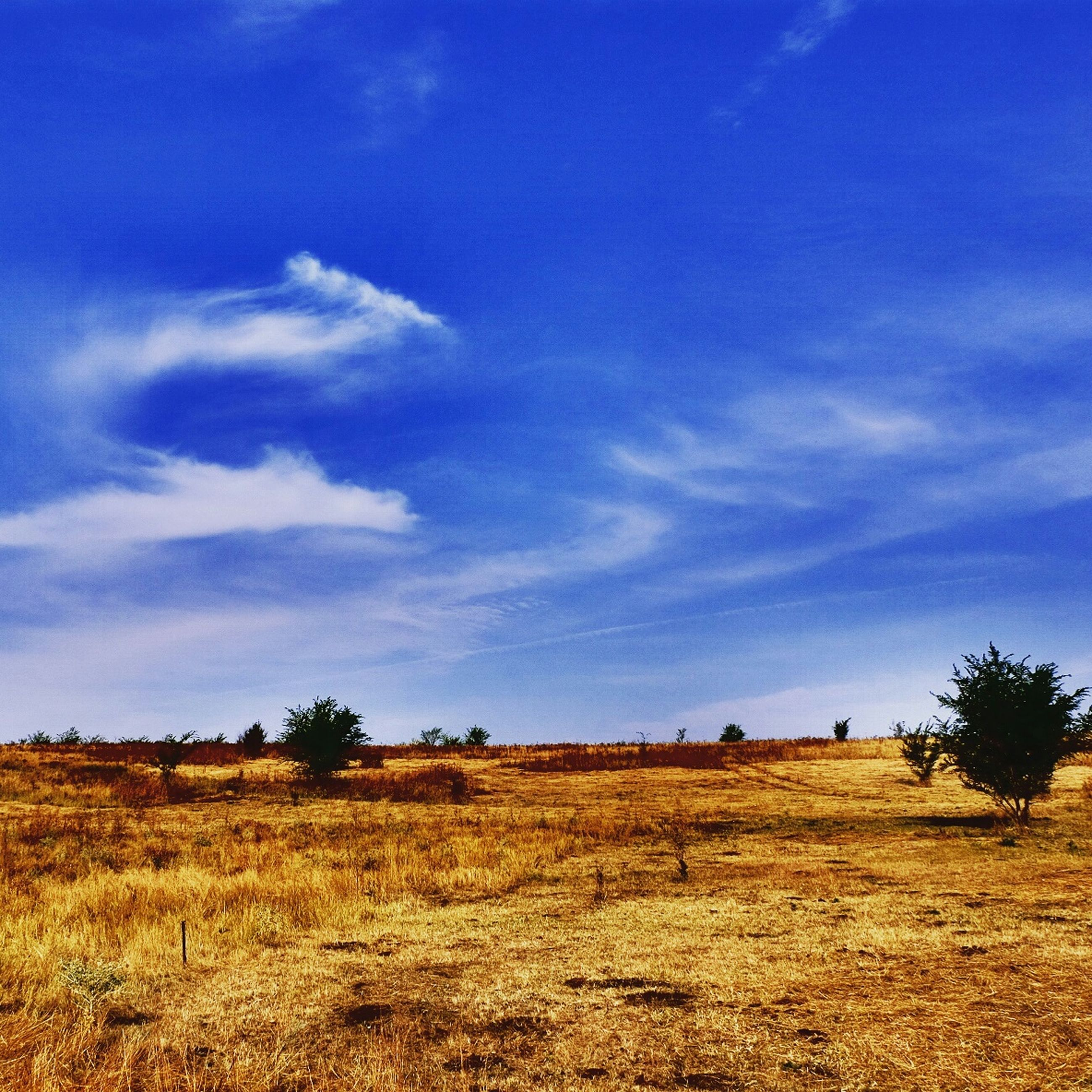 field, sky, landscape, tranquility, tranquil scene, blue, scenics, rural scene, beauty in nature, nature, grass, tree, agriculture, cloud - sky, growth, cloud, horizon over land, farm, non-urban scene, idyllic