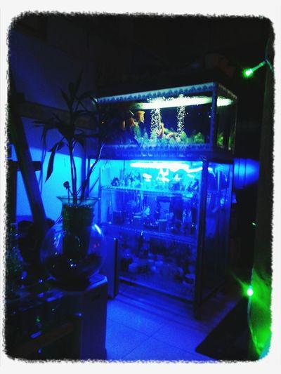 my aquarium at my room sweet room Taking Photos